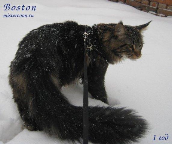 http://mistercoon.ru/images/phocagallery/Boston/thumbs/phoca_thumb_l_bos1g2.jpg?imagesid=1a1b2c974b567ba4b43ccc3d43a307eb