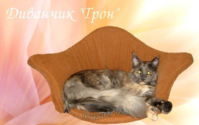 http://mistercoon.ru/images/phocagallery/Gracie/thumbs/phoca_thumb_l_tron1_gracie.jpg