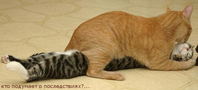 Кастрация кот гной