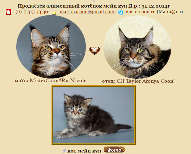 http://mistercoon.ru/images/stories/1SITE/Kitten/2015g/obsh/g_1m.jpg