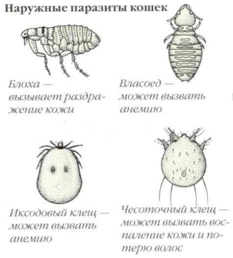 уберечь от паразитов