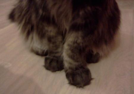 Проблема суставов у котов